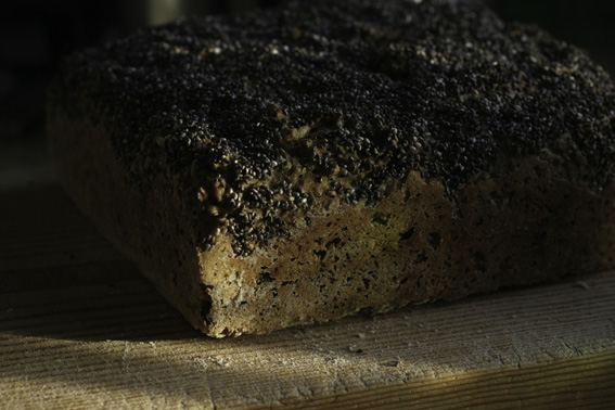 chia-seed-covered bread