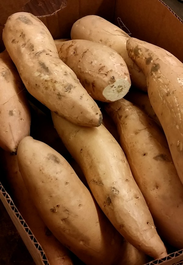big potatoes