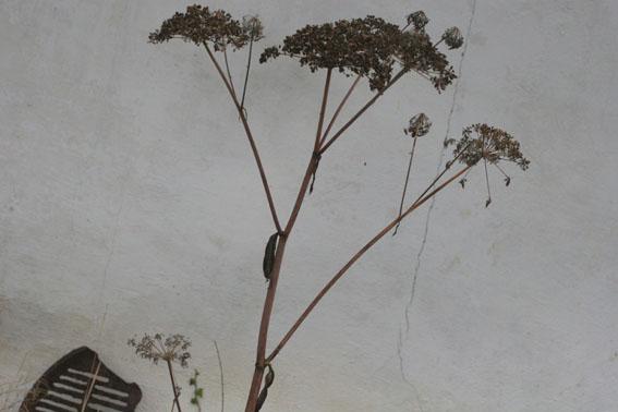 graphic plants