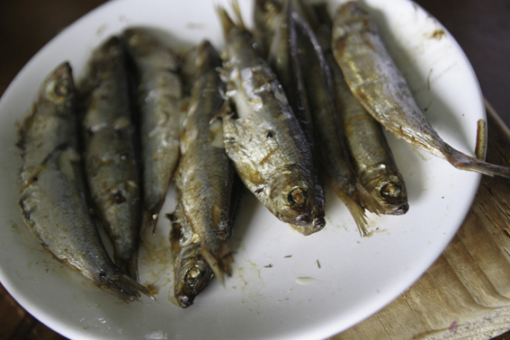 some grilled sprats
