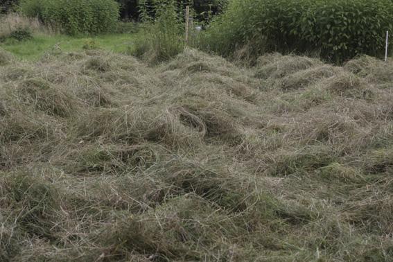 haymaking 1