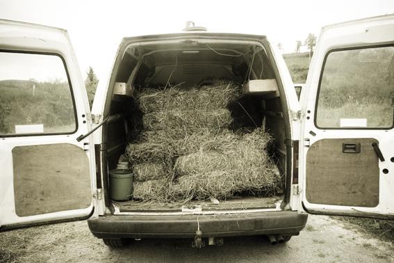 haymaking 3
